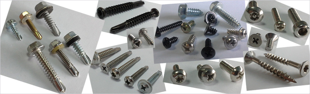 China best Self Tapping Screws on sales